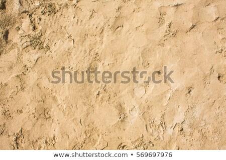 padrão · conchas · água · praia · mar · báltico · fundo - foto stock © meinzahn