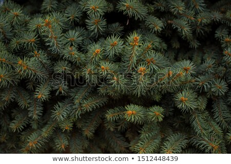 quadro · texto · galho · árvore · madeira - foto stock © smeagorl