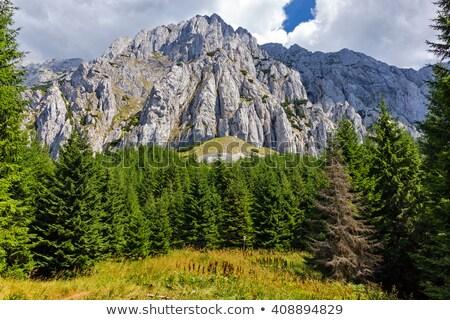 山 春 フィールド 山 ストックフォト © photosebia