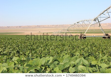 Agriculture, soybean field watering system in sunset Stock photo © simazoran