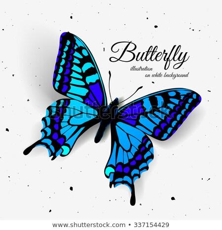 реалистичный бабочка тень шум Top мнение Сток-фото © m_pavlov