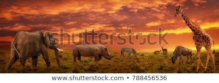 Afryki · chata · tradycyjny · plemię · błoto · ściany - zdjęcia stock © thp