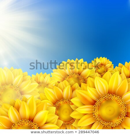 sunflowers with bright blue sky eps 10 stock photo © beholdereye