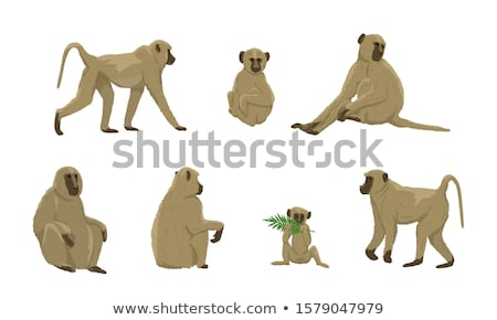 young animal monkey baboon stock photo © oleksandro