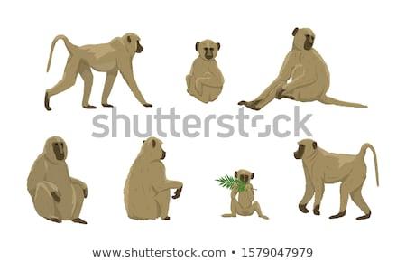 молодые животного обезьяны бабуин сидят клетке Сток-фото © OleksandrO