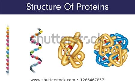 Hemoglobin Cell Stock photo © Spectral