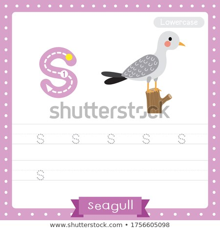 Flashcard alphabet S is for seagull Stock photo © bluering