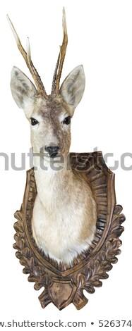 Ikra szarvas dolcsi vadászat trófea izolált Stock fotó © smuki