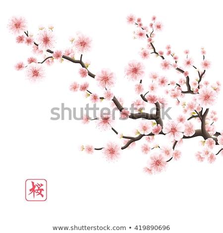 sakura · virágok · szett · izolált · eps · 10 - stock fotó © beholdereye