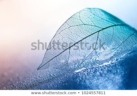 Najaar blad glas waterdruppels natuurlijke ontwerp Stockfoto © Valeriy