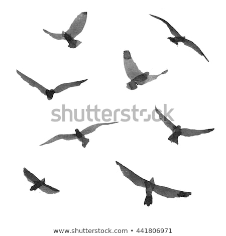 esboço · aves · nosso · pássaro - foto stock © cidepix
