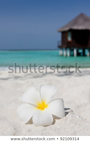 Close Up Of A Bungalow In Maldives Foto stock © hfng