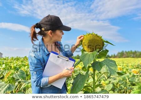 фермы работник подсолнечника женщину цветок природы Сток-фото © IS2