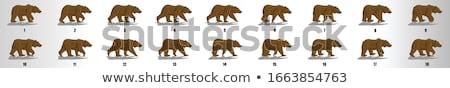 Sprite sheet brown bear walking Stock photo © bluering