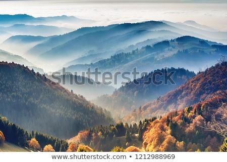 Outono floresta colina decídua brilhante amarelo Foto stock © Kotenko