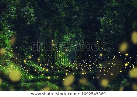 Gyönyörű tündér repülés éjszaka erdő tiszta égbolt Stock fotó © jossdiim