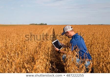 Szójabab mező aratás gazda szója bab Stock fotó © simazoran