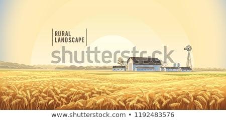 Campo di grano vettore autunno fieno raccolta manifesti Foto d'archivio © frimufilms