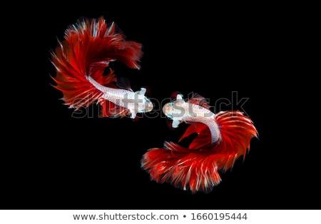 exotisch · vis · schoonheid · mariene · leven · natuur - stockfoto © anna_om