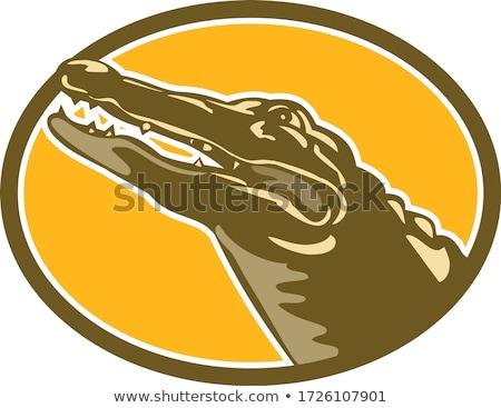 аллигатор голову овальный стиль ретро Сток-фото © patrimonio