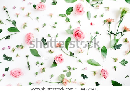 spring flowers with leafs stock photo © orson