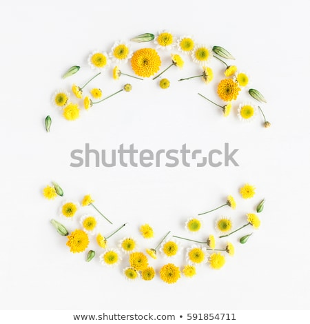 Floral quadro flores amarelas folha verde branco natureza Foto stock © boroda