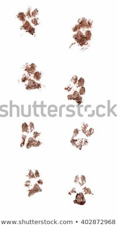 Sáros mancsok angol bulldog koszos láb Stock fotó © willeecole