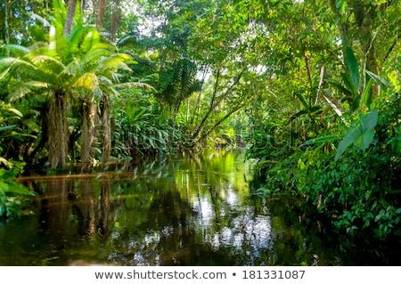 Trip To The Amazon Rainforest Stock photo © LittleLion