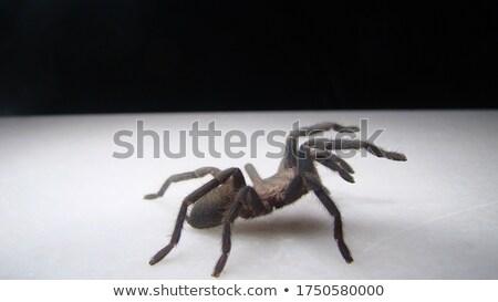 小 トカゲ クモ 食品 自然 緑 ストックフォト © ondrej83