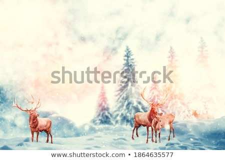fir trees covered with snow stock photo © inxti