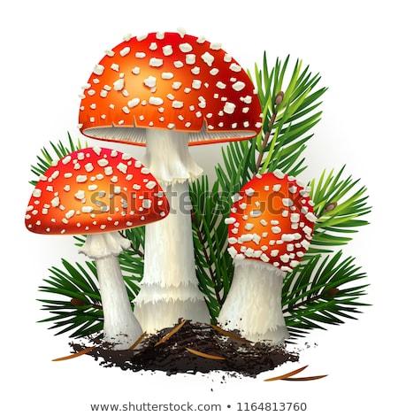 champignon · Rood · witte · vliegen · natuur · bos - stockfoto © elenarts