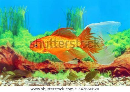 カラー 印刷 面白い 小 自然 ストックフォト © Yuran