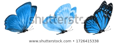 decorativo · voador · borboleta · grupo · projeto - foto stock © ulyankin