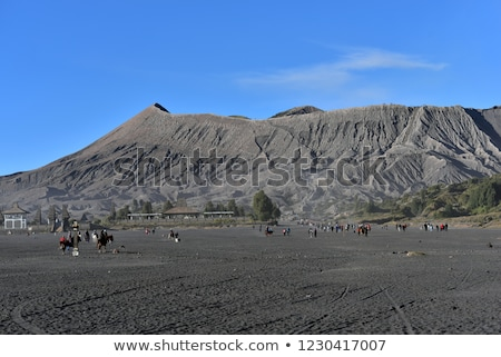 horse at the foothills of bromo volcano in indonesia stock photo © johnnychaos