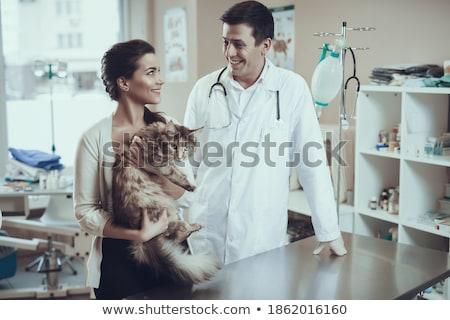 Veterinário Maine brasão branco mulher médico Foto stock © wavebreak_media