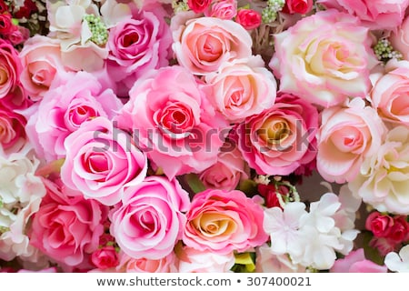 Stock photo: Pink Roses background red