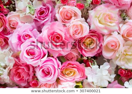 Rosa rose rosso passione amore Foto d'archivio © scenery1