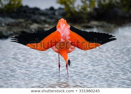 Rosa flamingo ilha belo Foto stock © meinzahn