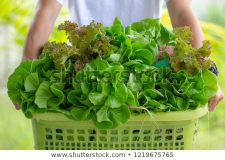 marul · çerçeve · taze · yeşil · kırmızı - stok fotoğraf © digifoodstock