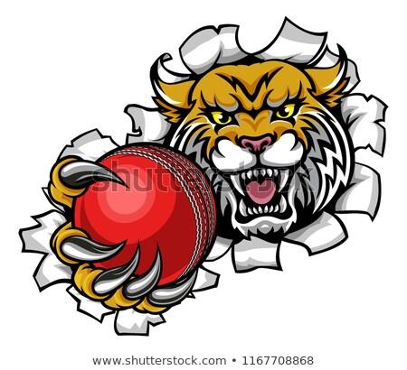 Wildcat Holding Cricket Ball Breaking Background Stock photo © Krisdog