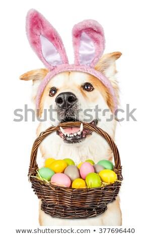 Stockfoto: Golden · retriever · hond · mand · gras · honden