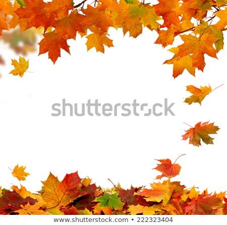 autumn fading leaves Stock photo © alexaldo
