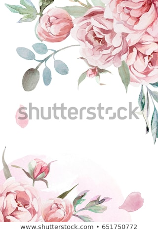 flowers of pink peonies with green leaves and buds on a gray concrete background with copy space gr stock photo © artjazz