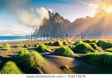 自然 崖 実例 ツリー デザイン 葉 ストックフォト © bluering