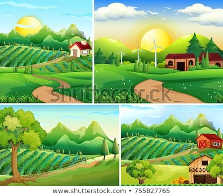 Négy égbolt fa nap tájkép művészet Stock fotó © colematt