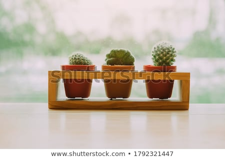 flower pots with different types of plants stock photo © colematt