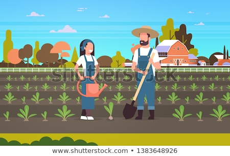Planting Vegetable, Woman Gardening, Beet Vector Stock photo © robuart