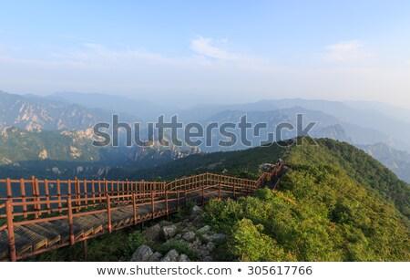 Pino rock rupe parco Corea del Sud cielo Foto d'archivio © dmitry_rukhlenko