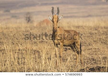szavanna · tájkép · Tanzánia · Afrika · házak · völgy - stock fotó © prill