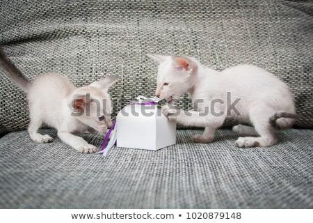 Kedi yavrusu hediye kutusu mavi beyaz uzay hediye Stok fotoğraf © dnsphotography